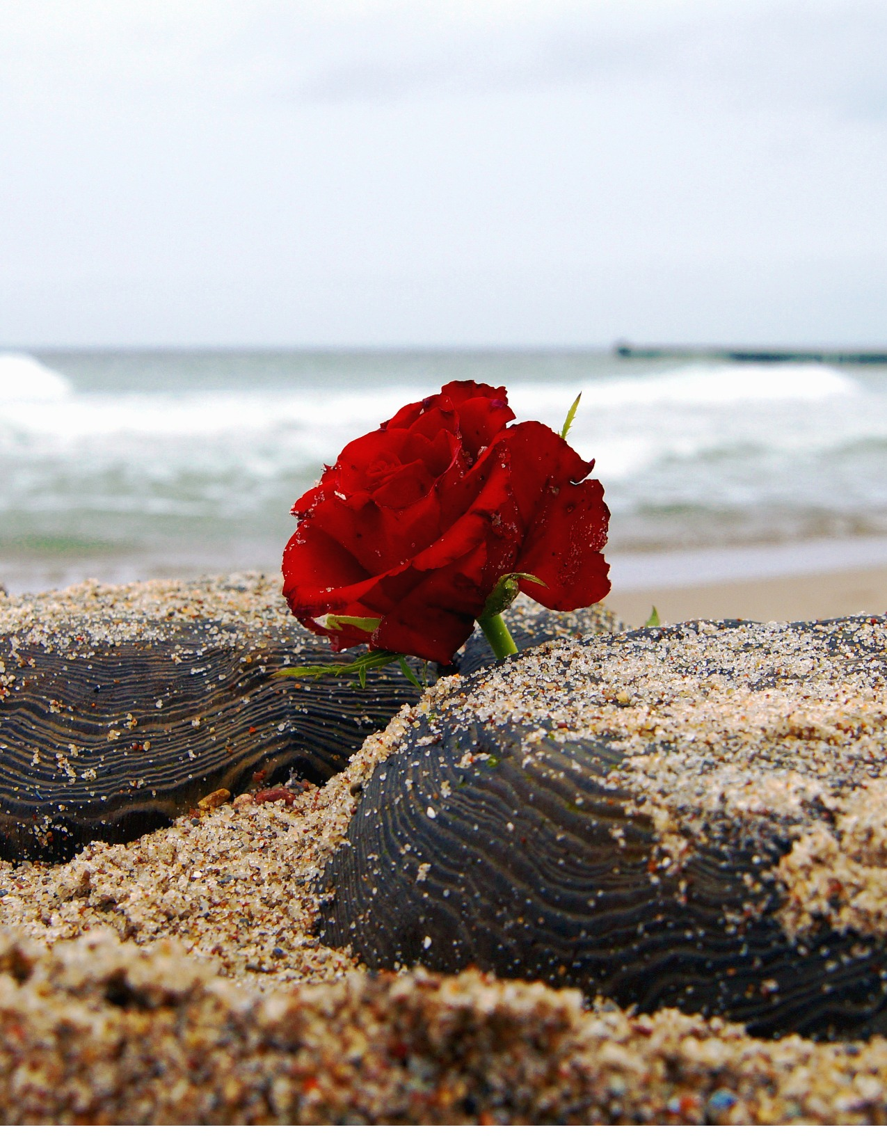 Flower on the Beach Signifying the Loss of a Loved One